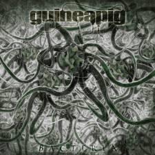 Guineapig - Bacteria